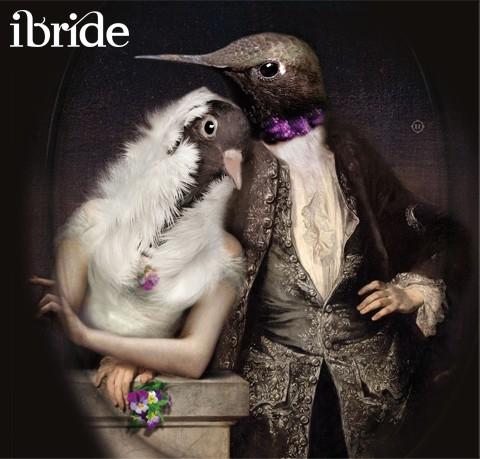 Tablett Lovebirds Ibride